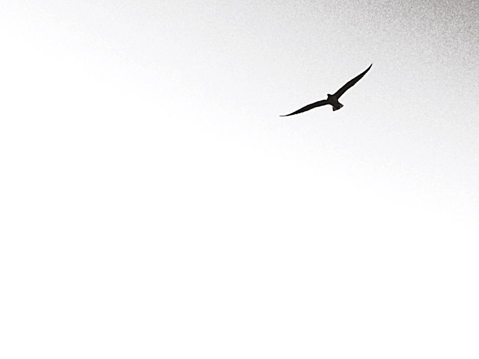 Bird Nature Photography Spread Wings Outdoors B&w Photography B&WPhoto
