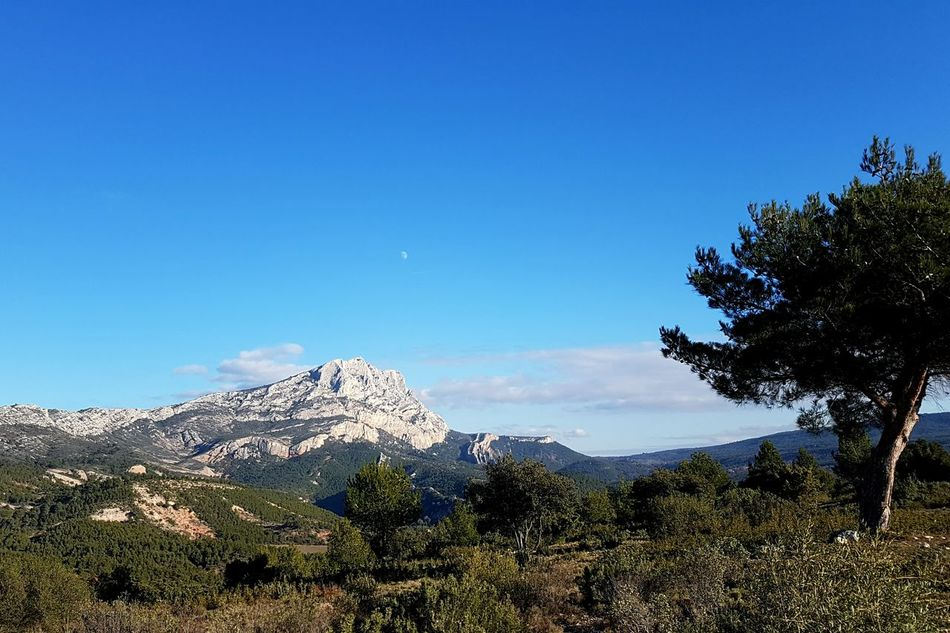 Blue Pine Tree Mountain Pinaceae Pine Woodland Clear Sky Landscape Tree Nature Mountain Peak No People Beauty In Nature Outdoors Scenics Sky Day Saintevictoire Aix-en-Provence Naturelover Montagne Mountains Provence Provence Alpes Cote D´Azur GetbetterwithAlex