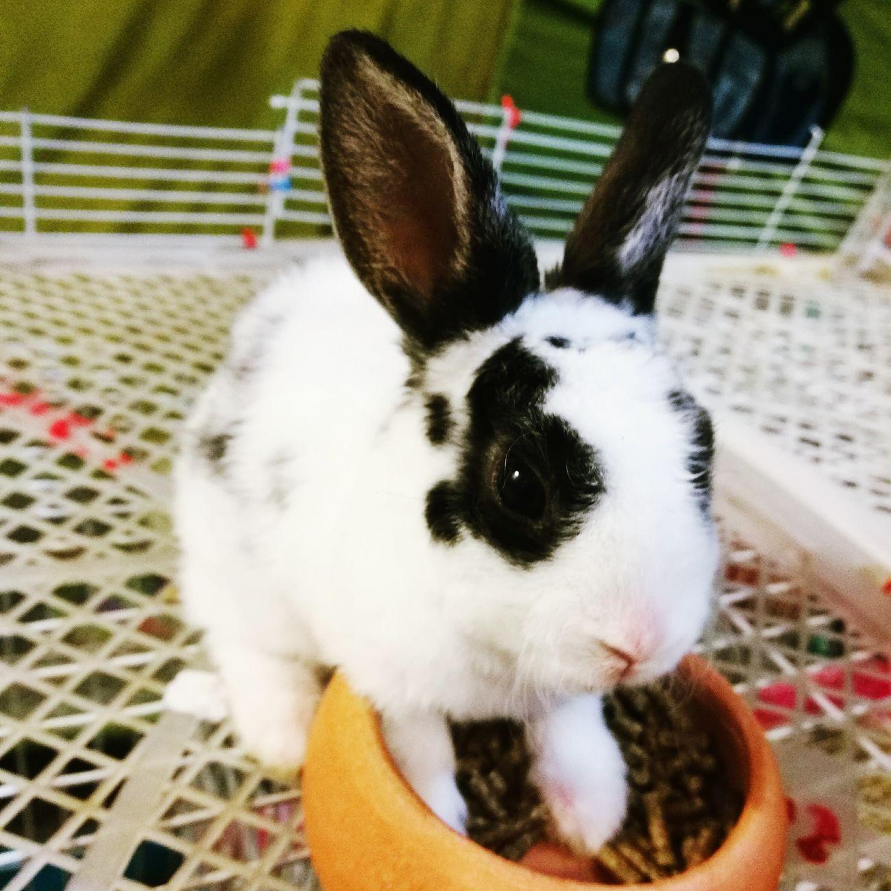 Rabbit . Rabbit ❤️ Animal Themes Pets One Animal Rabbit Rabbit - Animal