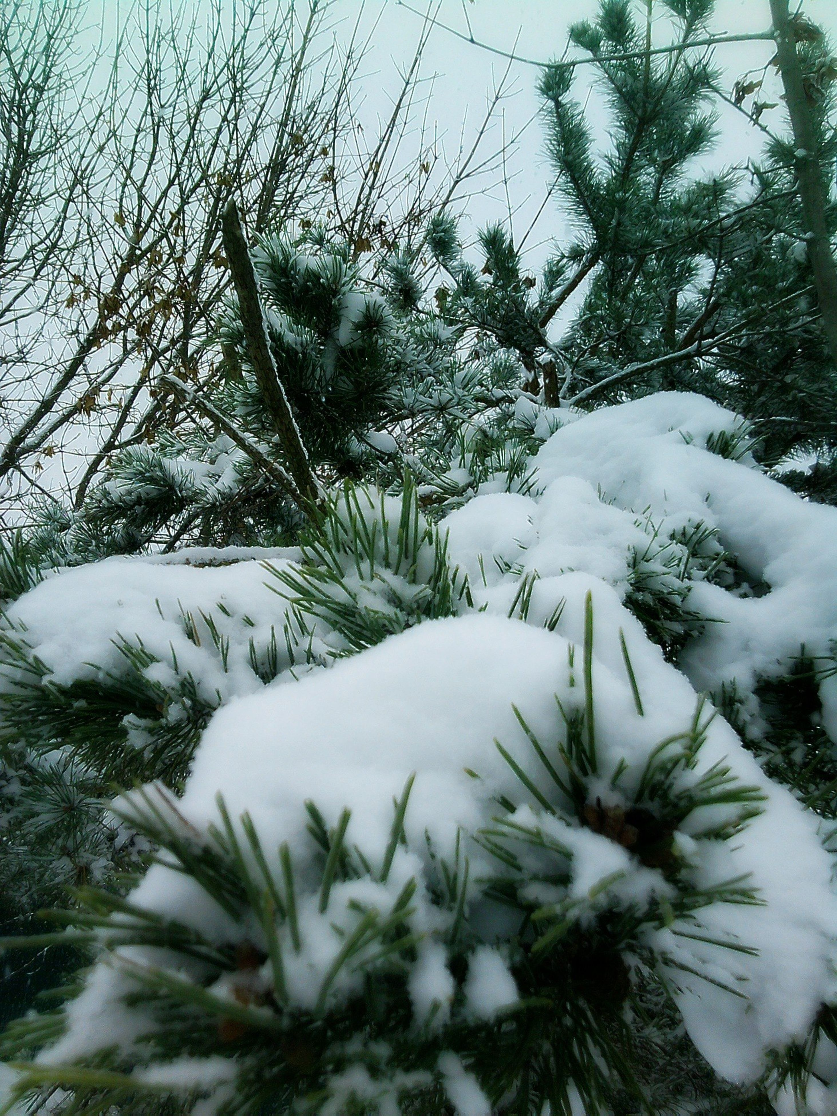 snow, winter, cold temperature, season, tree, weather, white color, covering, frozen, nature, beauty in nature, growth, tranquility, covered, branch, tranquil scene, scenics, outdoors, day, sky