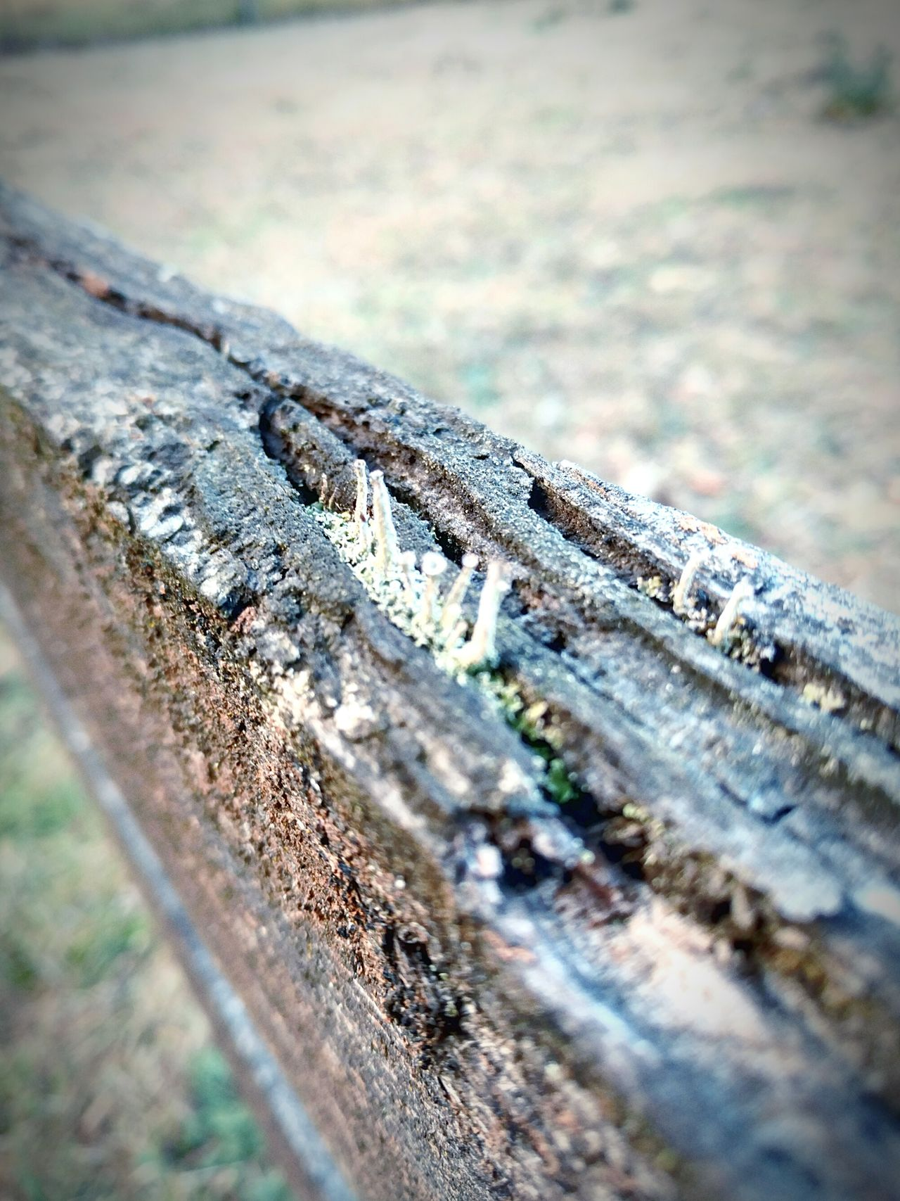 Life in The Rot Pasture pastured Fences & Beyond Lichen Decay Macro Wood Rotten Life In The Crack Board Fence Post Grass Growth