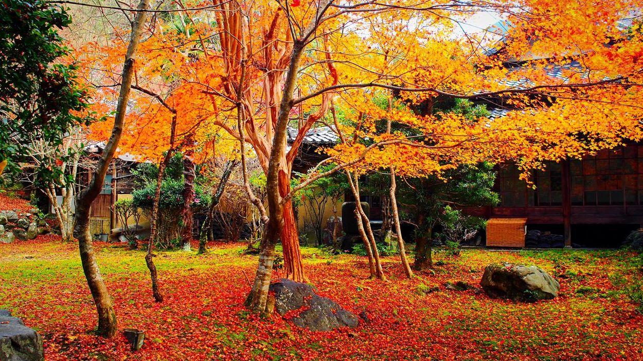 栖賢寺 京都 Kyoto Kyoto, Japan Autumn Colors Travel Destinations Hello World Japanese Garden Autumn Leaves Kyoto Autumn Autumn Beauty In Nature 紅葉 Enjoying Life Relaxing