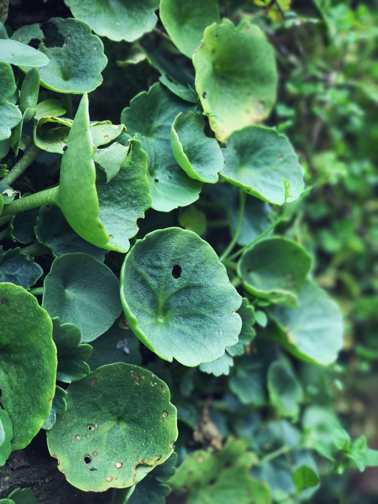 Green Color Leaf Growth Nature Plant No People Outdoors Day Close-up Animal Themes Freshness Beauty In Nature