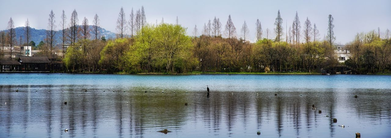 water, tree, lake, architecture, waterfront, reflection, nature, built structure, day, outdoors, building exterior, no people, tranquility, beauty in nature, sky, scenics, bird