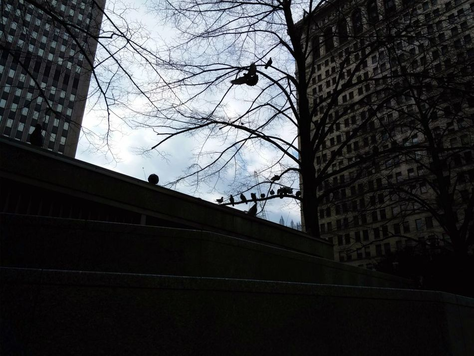 No Edit No Filter Downtown Pittsburgh Birds Citylife Cityview Looking Up Building Exterior Buildings Secret Spaces Personal Perspective
