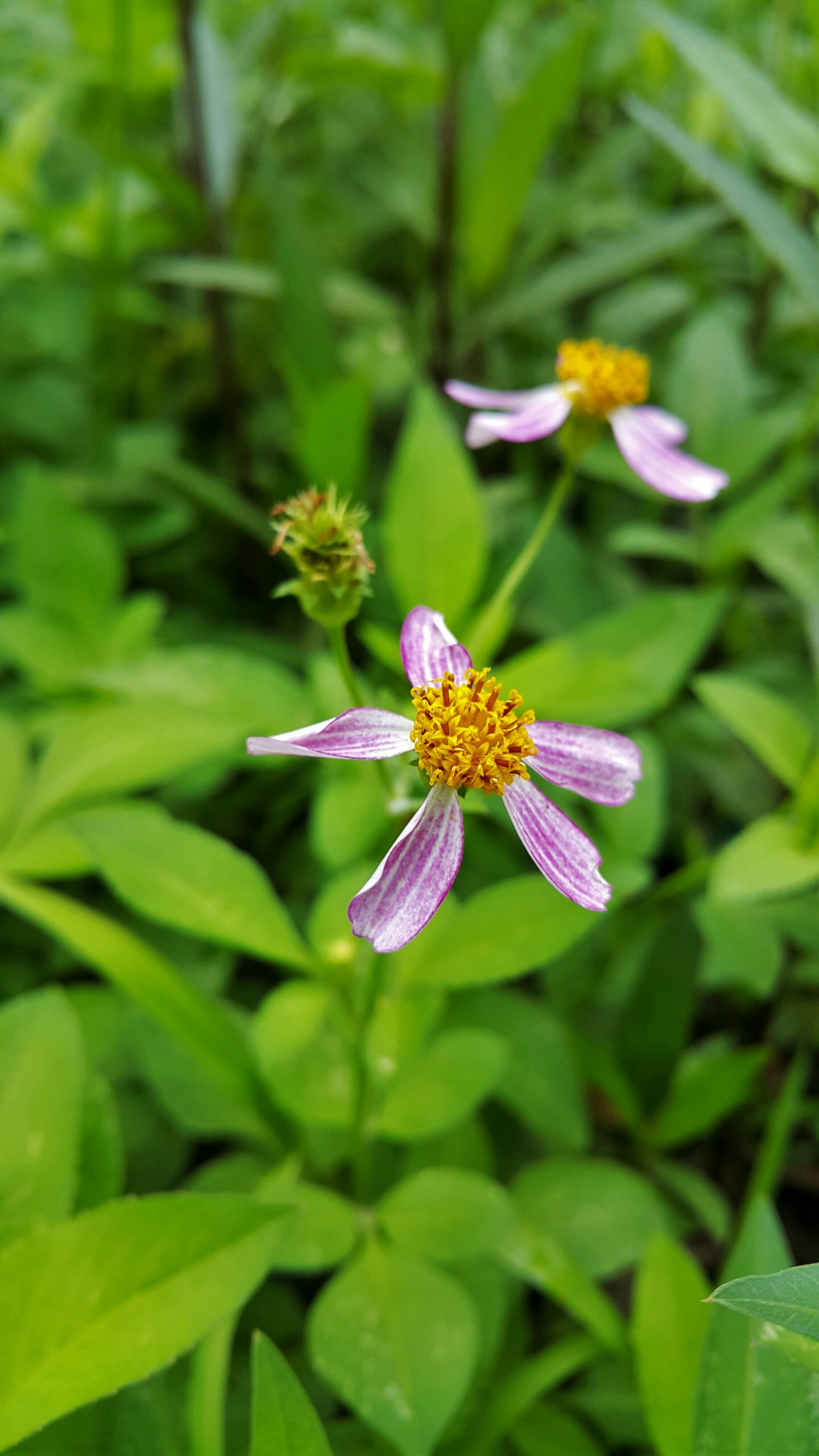 flower, petal, freshness, purple, fragility, flower head, growth, beauty in nature, plant, blooming, close-up, focus on foreground, nature, leaf, green color, high angle view, insect, in bloom, pollen, single flower