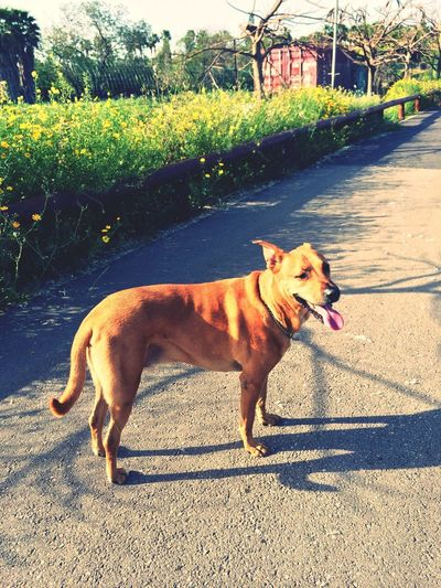 I Love My Dog Running Sport