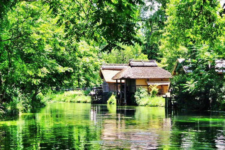 長野県 安曇野市 大王わさび農場 Japan Nagano Azumino Daiou Wasabi Farm Nature River Spring Water Transparency