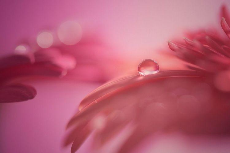 花と雫 Flower Close-up Drop First Eyeem Photo