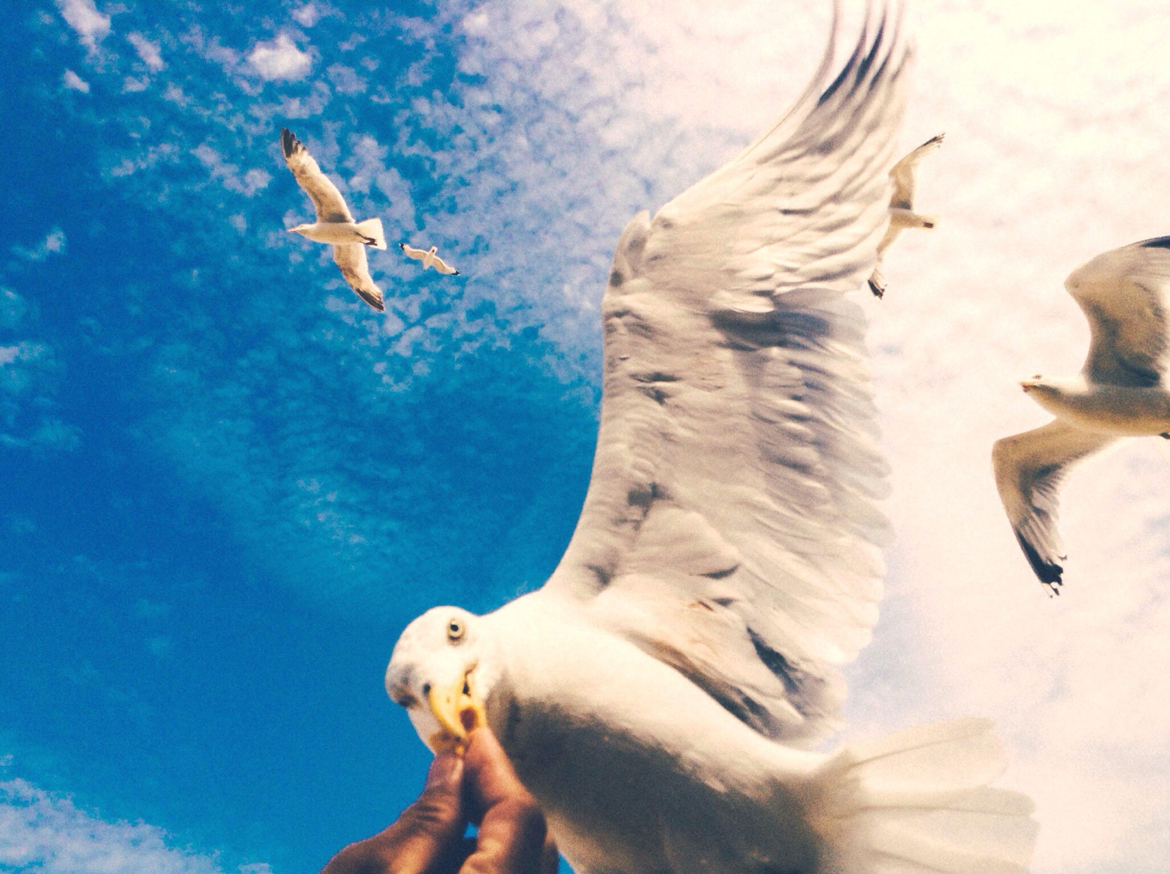 35mm Film Negative Shootfilm Staybrokeshootfilm Olympusboyz Film 35mm Film Photography First Eyeem Photo