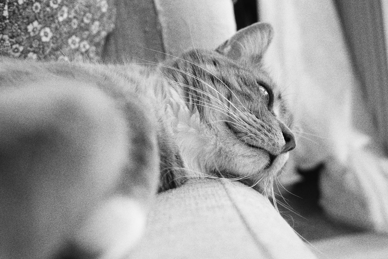 Pets Domestic Cat Domestic Animals One Animal Animal Themes Mammal Sleeping Relaxation Feline Cat Indoors  Resting Comfortable Close-up One Person Home Interior Day Tranquil Scene Whisker Adorable Cat  Cute Full Frame Kitten Monochrome Portrait