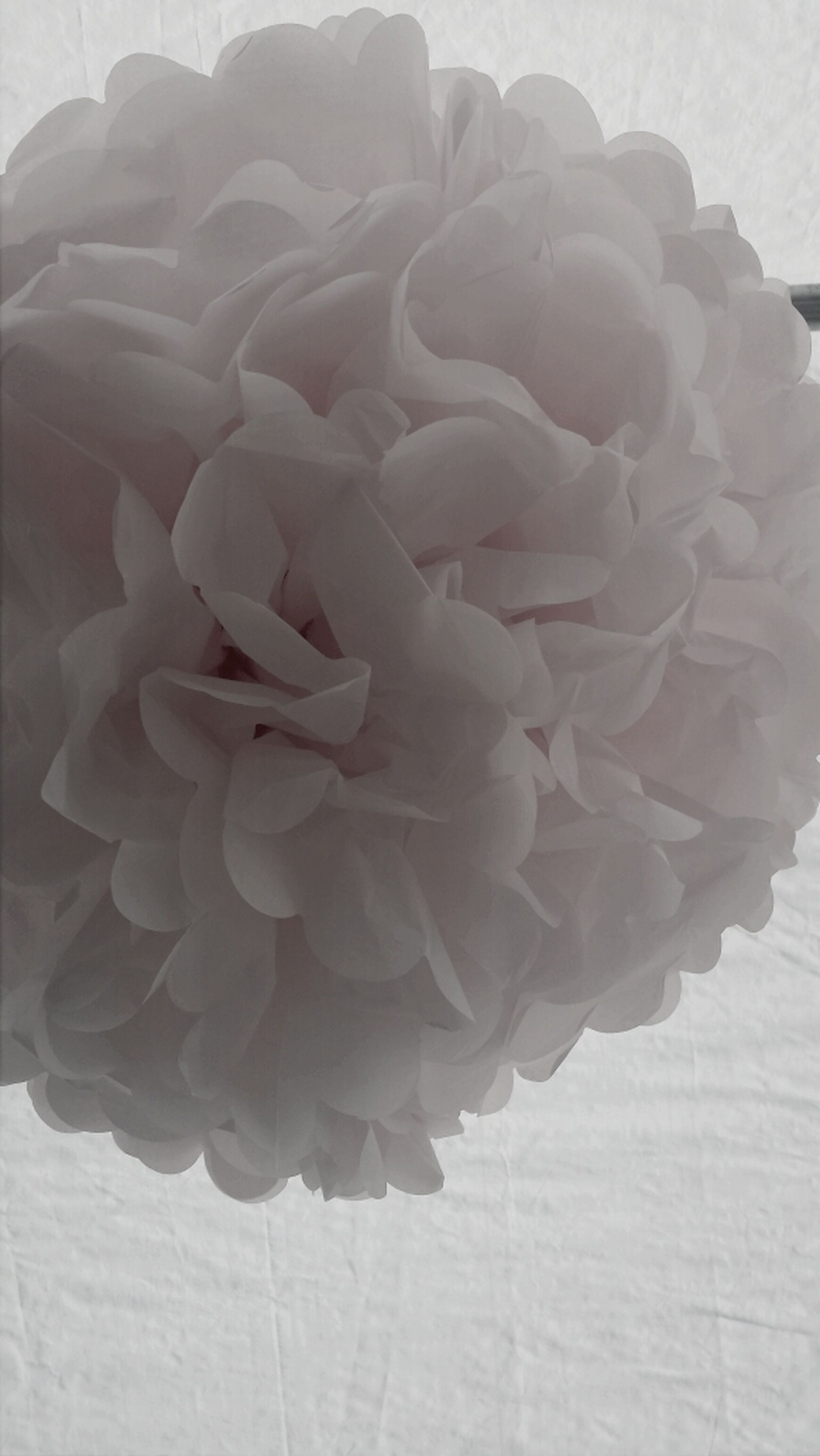 flower, petal, flower head, fragility, freshness, beauty in nature, rose - flower, close-up, growth, nature, blooming, single flower, plant, rose, natural pattern, no people, in bloom, white color, day, blossom