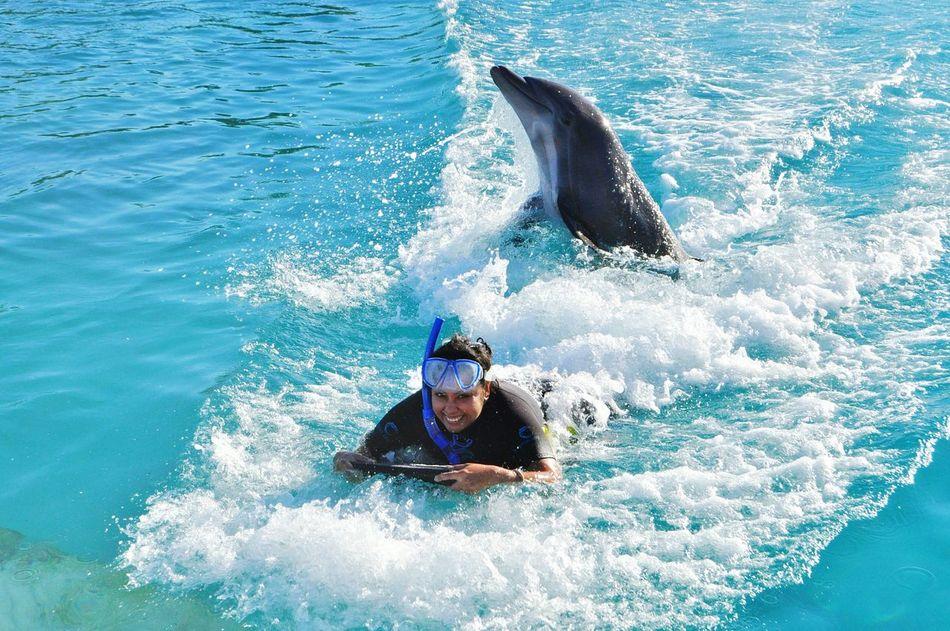 Beautiful stock photos of bahamas, 25-29 Years, Animal Themes, Animals In The Wild, Aquatic