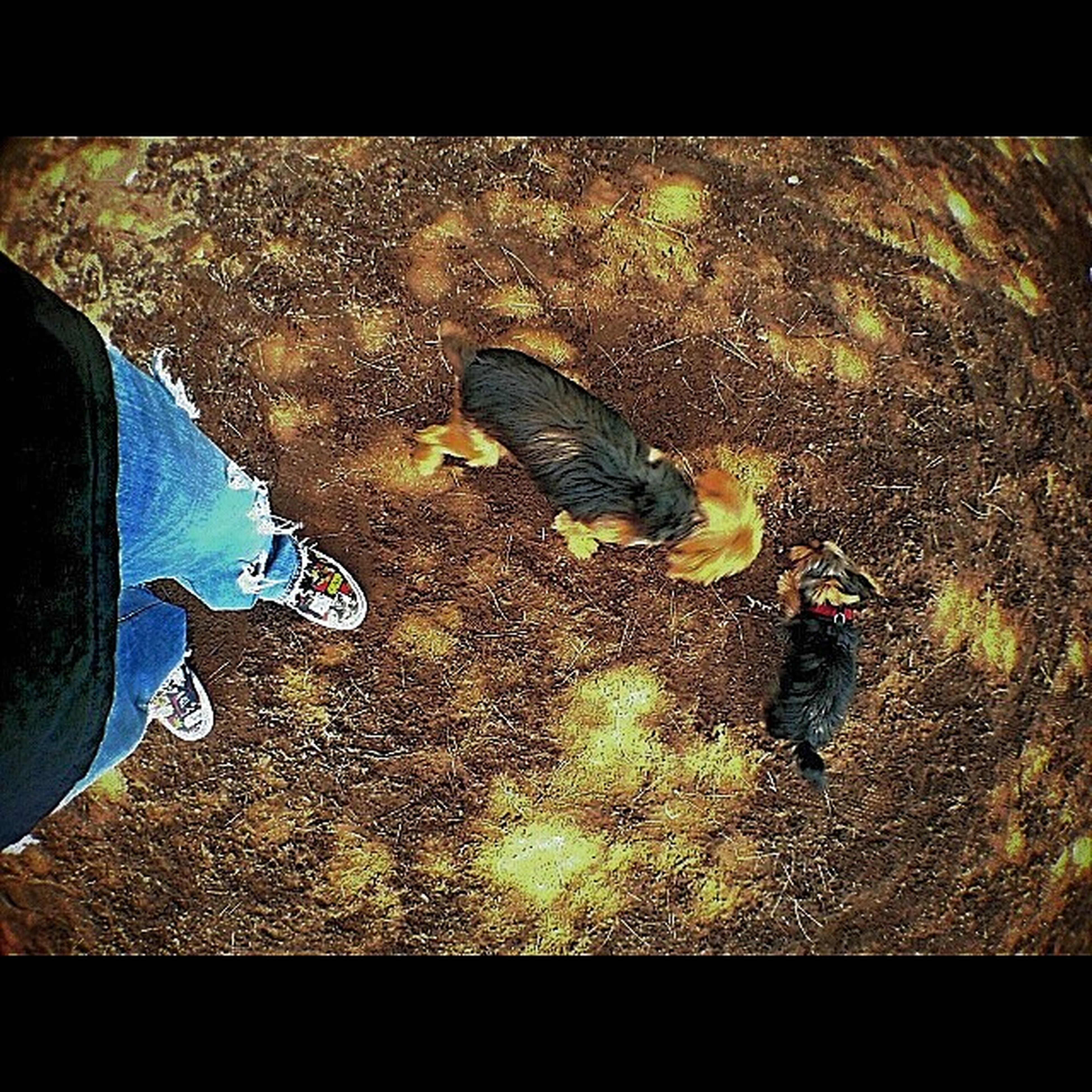 high angle view, transfer print, street, auto post production filter, low section, shoe, person, asphalt, yellow, transportation, road, day, outdoors, unrecognizable person, part of, ground, sunlight