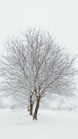 Winter Snow Nature Cold Temperature Tree Outdoors Snowing Beauty In Nature Motion No People Branch