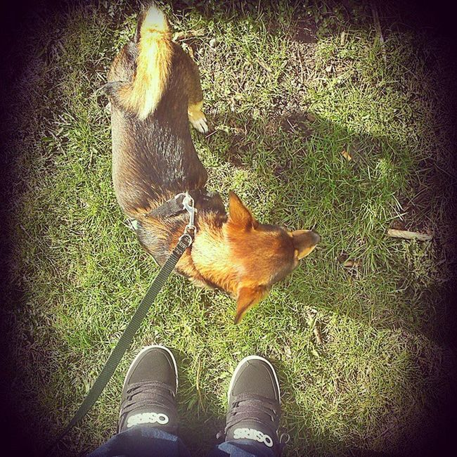 Debbie. Dog Pet Love Sun Spring Osiris Protocol Osirisshoes Boots Skates Skateboots Skateshoesthebest