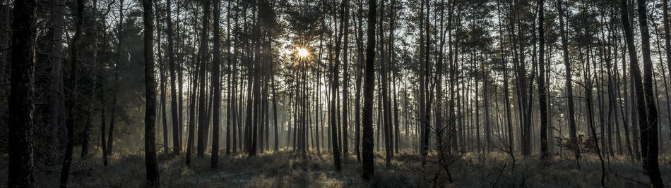 Forest Forest Photography Forestwalk Growth Landscape Landscape_Collection Nature No People Outdoors Scenics Sky Sun Sunrise The Netherlands Tree Veluwe WoodLand