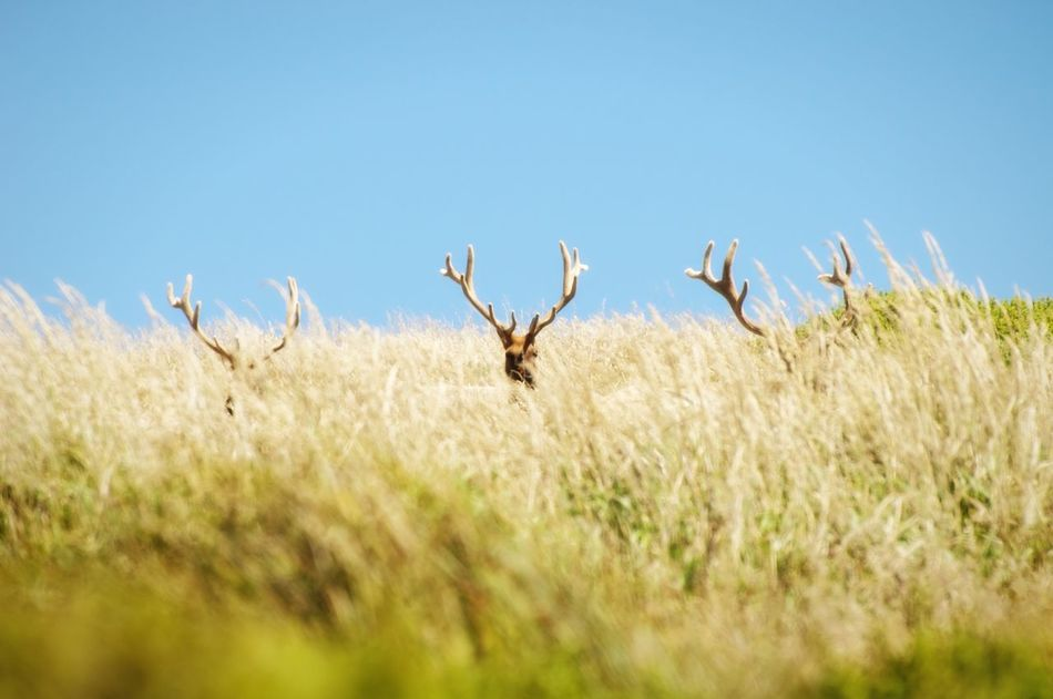 Beautiful stock photos of deer, Animal Themes, Animals In The Wild, Beauty In Nature, Clear Sky