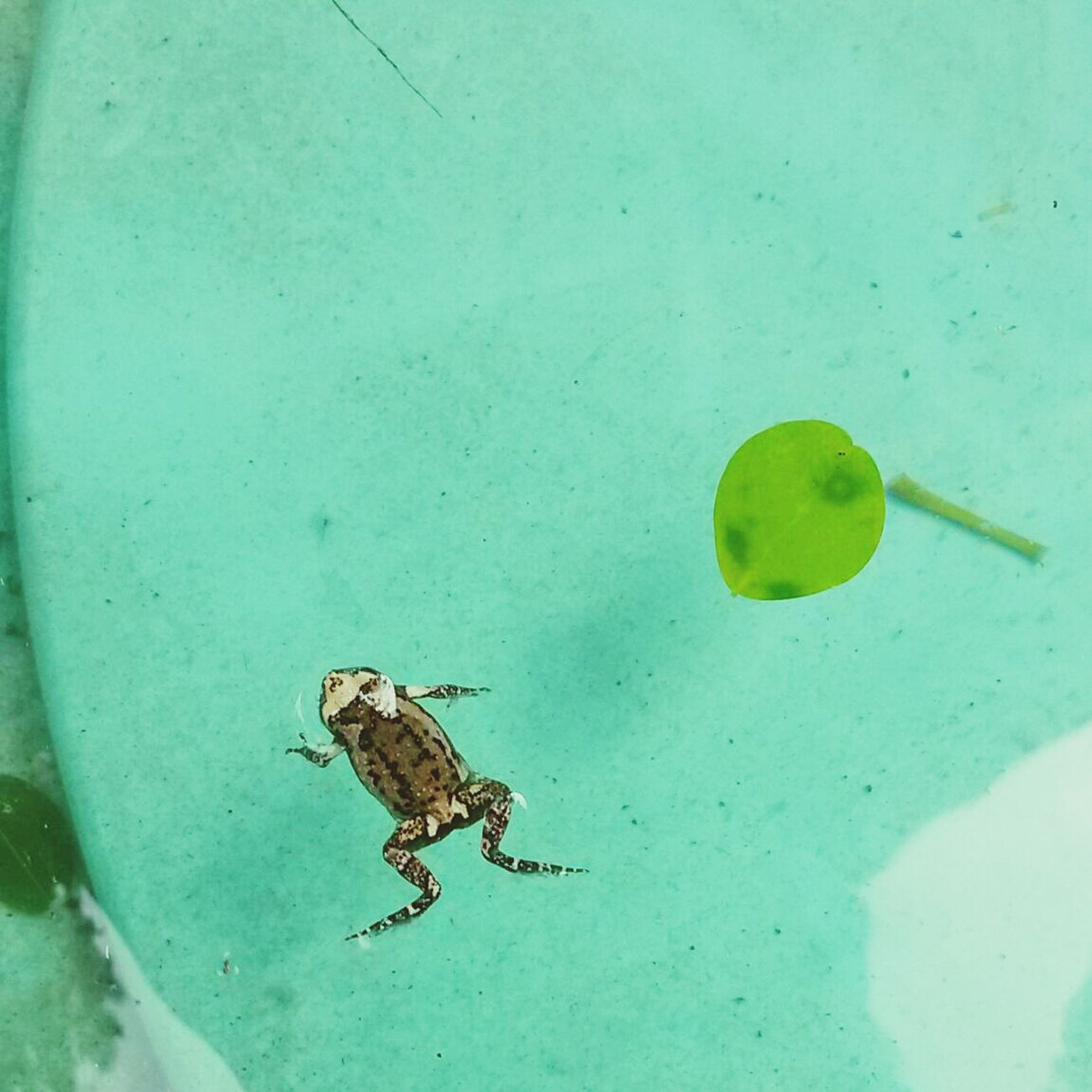 Little froggy. Filippa K Asks: What Inspires You?