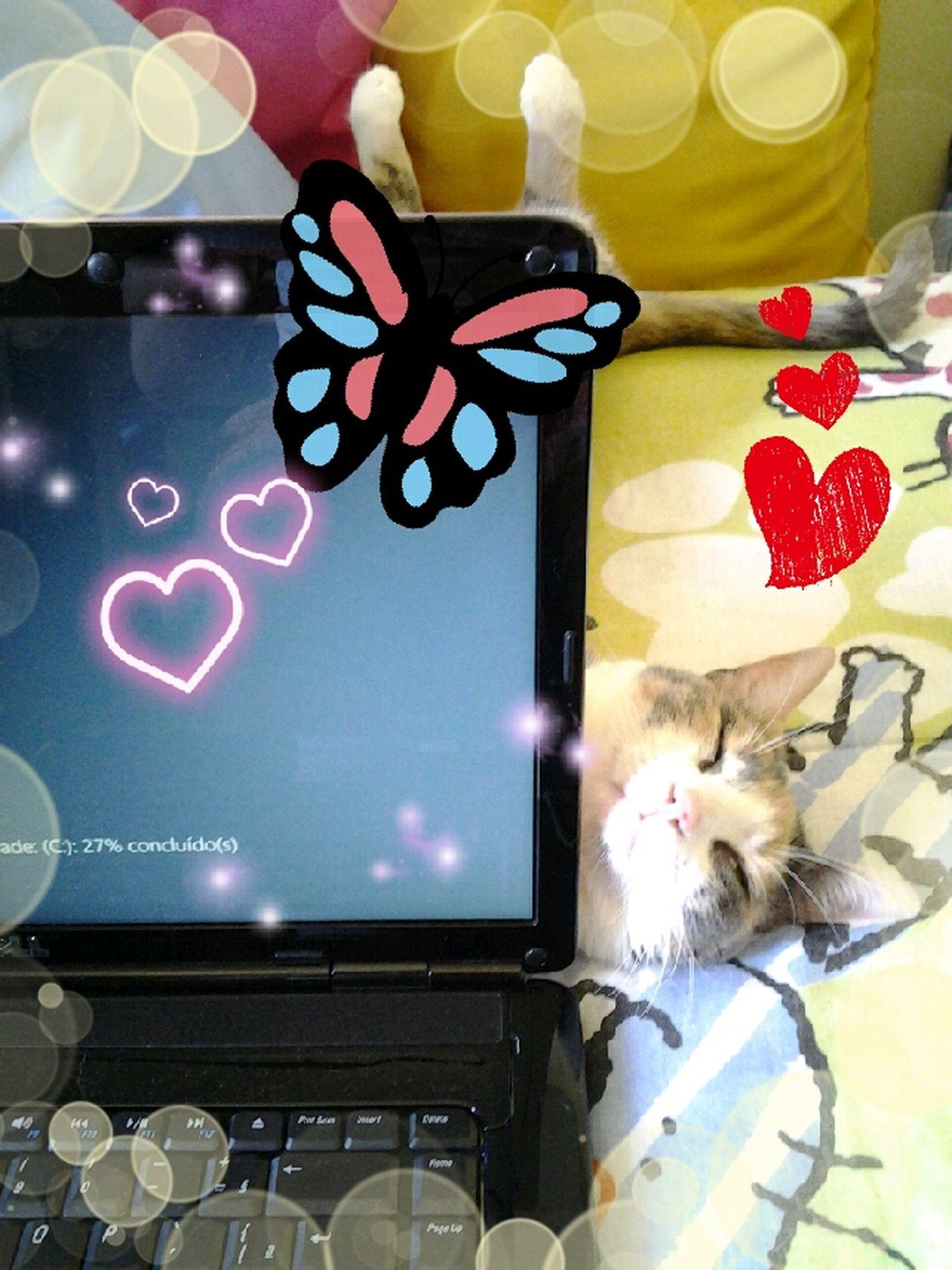 Ajudando a mamãe. Pet Cat