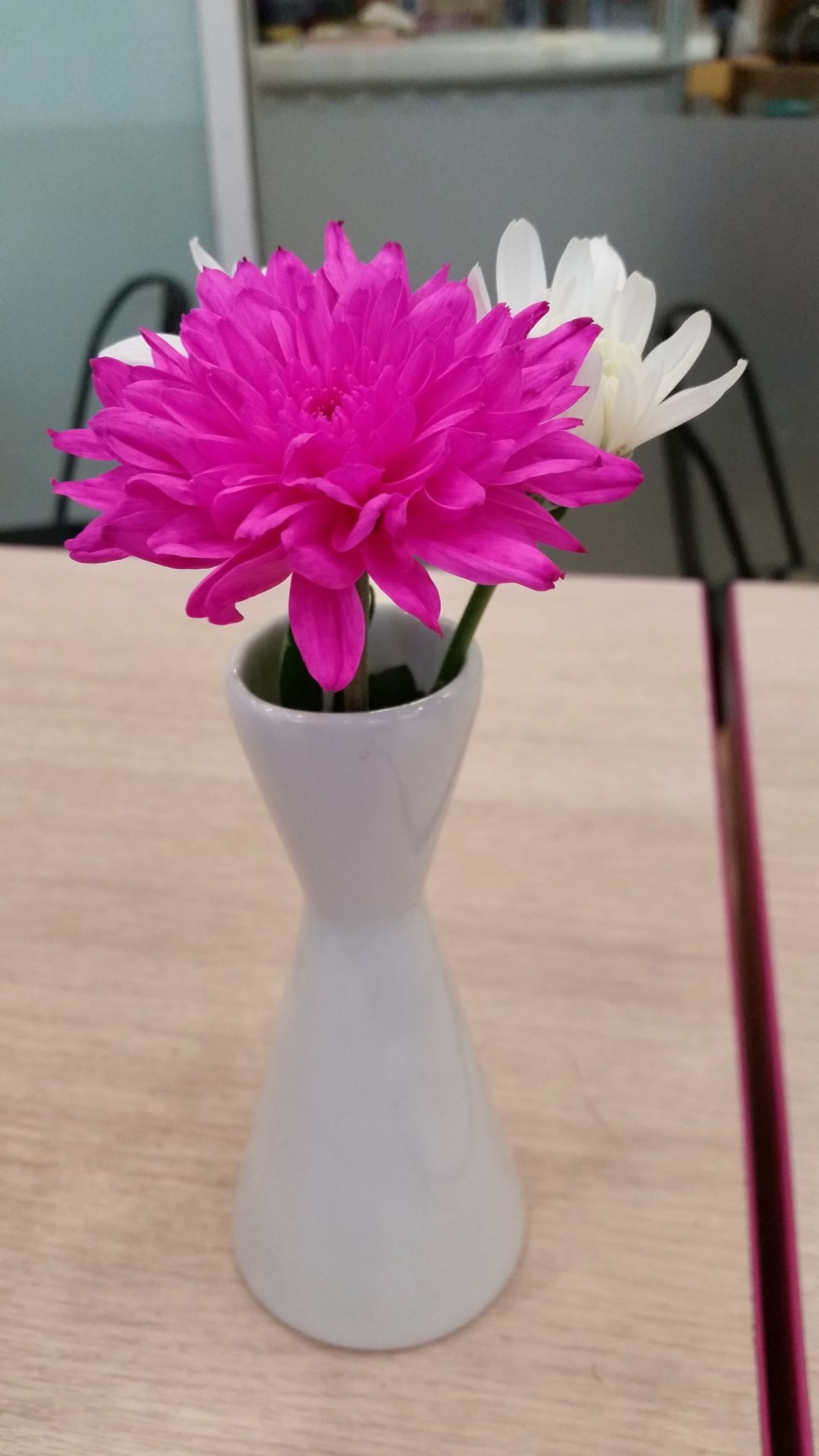 Close-up Flower No People Pink Color Table Vase