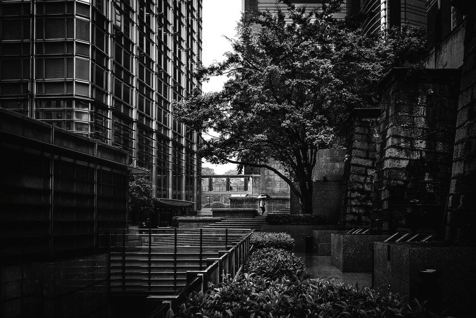 Hong kong. Built Structure Tree Architecture Building Exterior No People City Outdoors Day Nature Blackandwhite Black And White Photography Hong Kong Street Photography EyeEm Masterclass This Week On Eyeem Documentary Photography Travel Destinations Dark One Person Fresh on Market 2016 People Real People Built_Structure