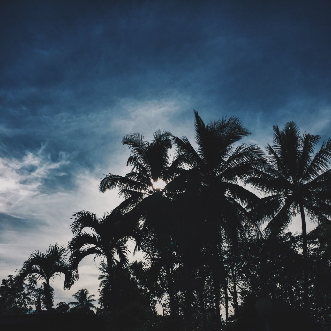 Low Angle View Of Silhouette Palm Trees Against Blue Sky