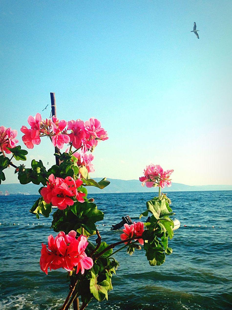 Enjoying The Sun Sunshine Sea Relaxing Flowers Marmarasea Beautiful Day Enjoying Life Hello World Weekend
