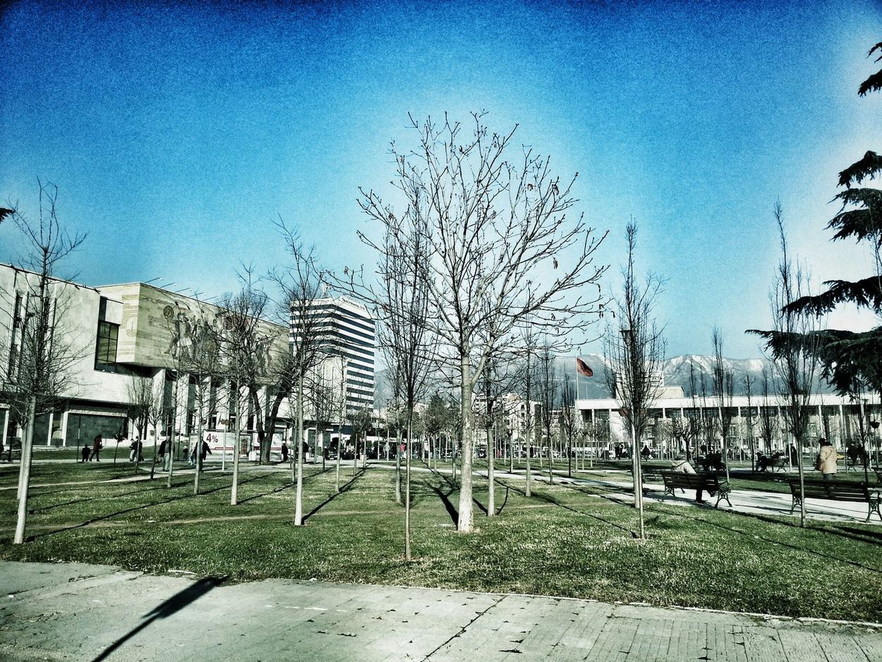 Tirana View Center Sunnyday Winter Trees Taking Photos EyeEm Nature Lover
