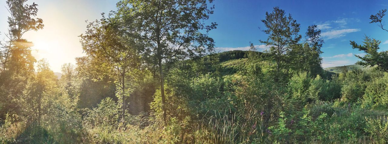 Panorama Rothaarsteig Bruchhausen Sauerland Nature Sunlight Growth Tree Outdoors Blue Sky Sunset No People Forest Grass Plant Landscape Point Of View Tourism Feuereiche Trip Hike Green