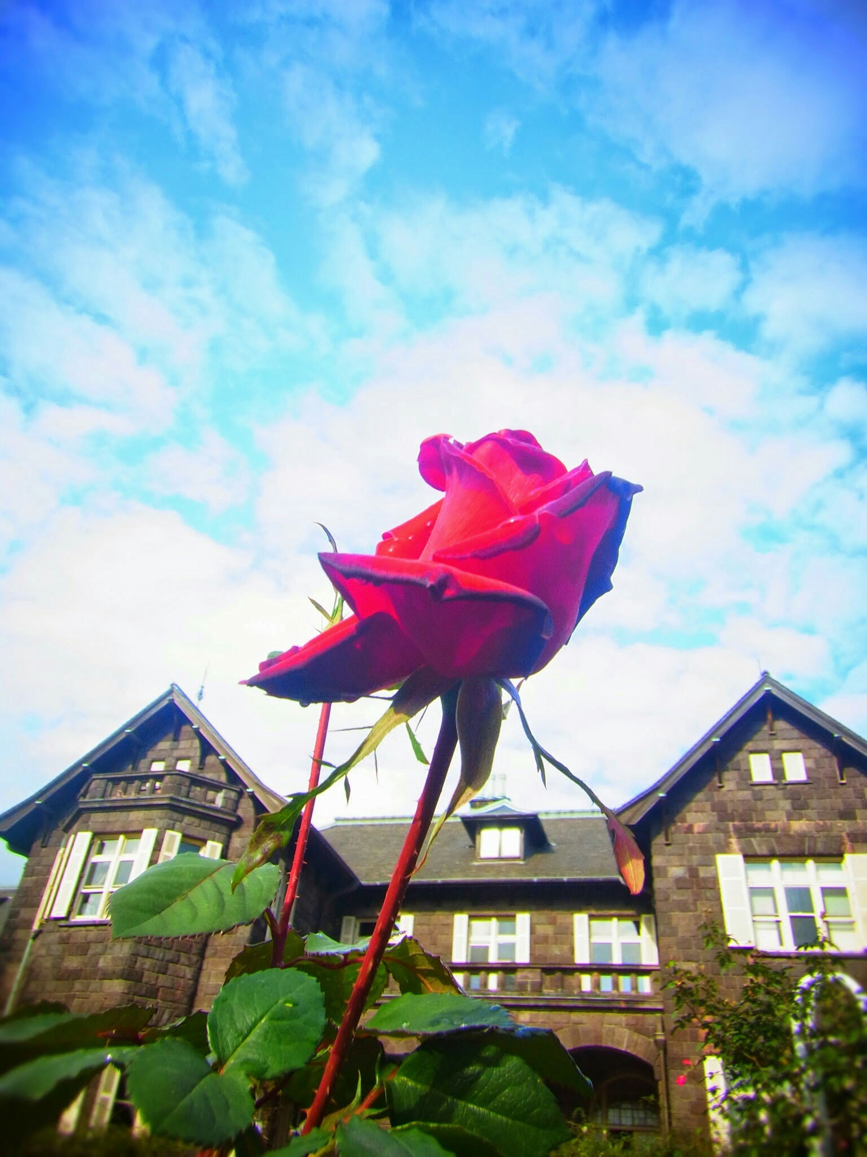 flower, sky, low angle view, petal, built structure, building exterior, architecture, fragility, freshness, flower head, growth, cloud - sky, nature, cloud, beauty in nature, plant, red, leaf, day, pink color