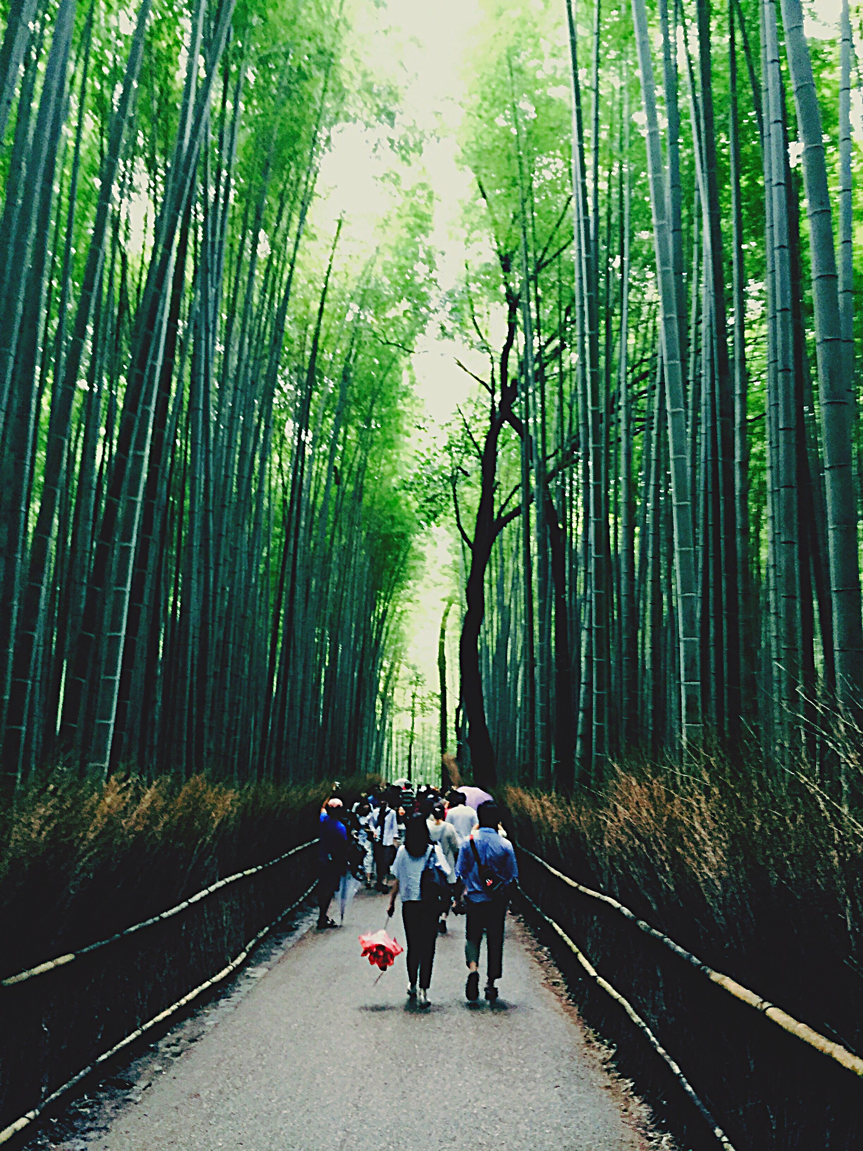 nature, real people, growth, tree, bamboo grove, beauty in nature, day, walking, outdoors, the way forward, tranquility, transportation, green color, road, bamboo - plant, full length, forest, leisure activity, women, men, lifestyles, togetherness, scenics, friendship, sky, people