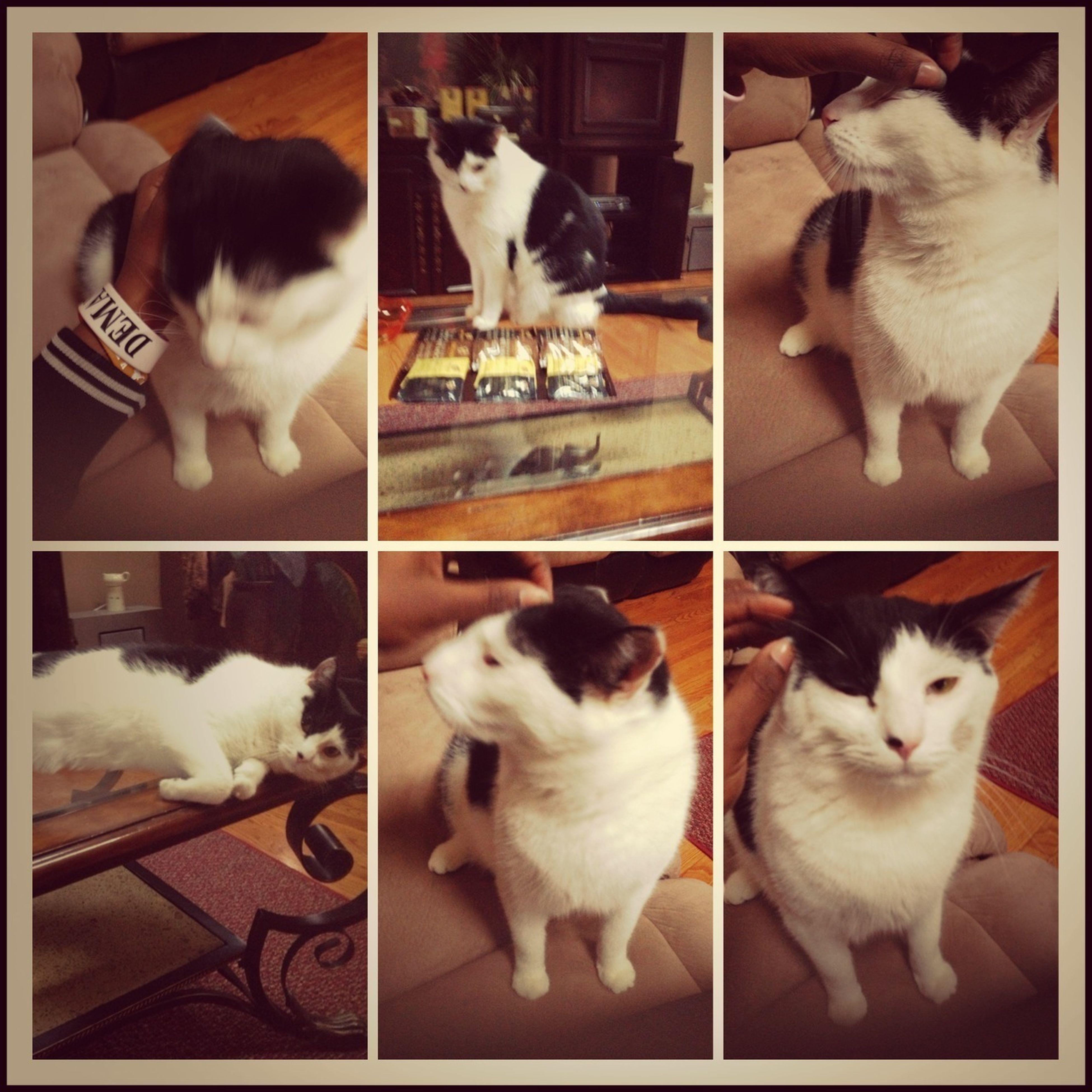 Mi Boyfriend Cat Fat Asl For No Reason