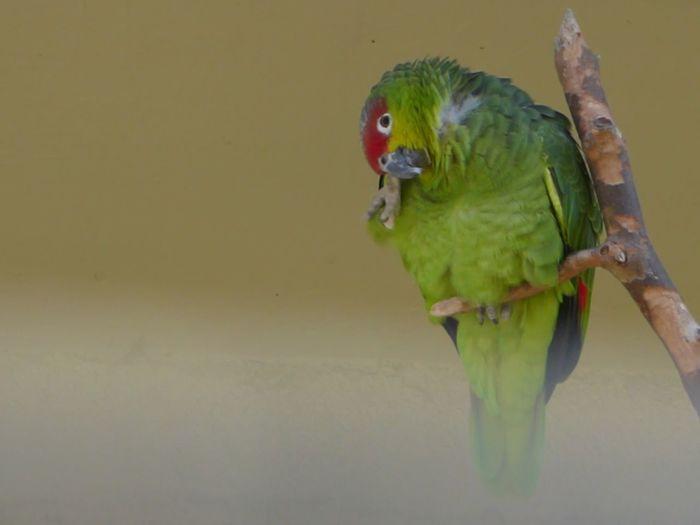 Papagaai Zoo Antwerpen Animal Themes Bird