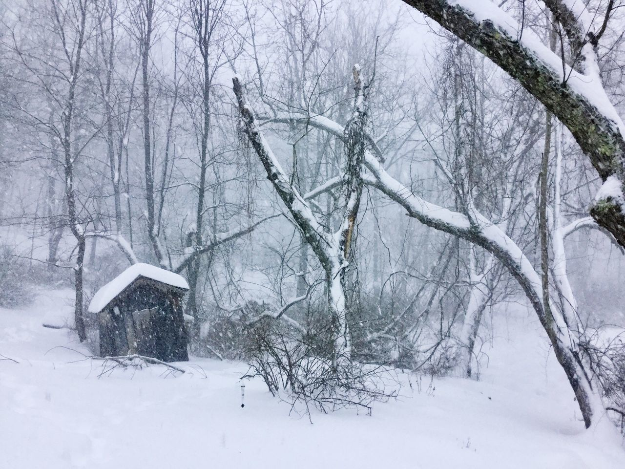 Cold Temperature Snow ❄ Bare Tree Weather Nature Winter No People Day Outdoors Smokehouse