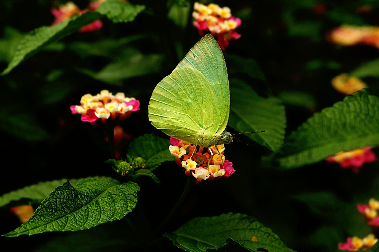 Hello World Taking Photos Annimal Take Photos Butterfly Small Flowers Flower Collection Nature_collection Eye4photography  Flowers, Nature And Beauty I LOVE PHOTOGRAPHY