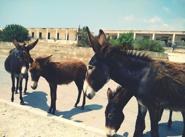 They were so playful I just couldn't ignore them! Cyprus Donkeys Friendly Gung Animals No People Meeting New Friends