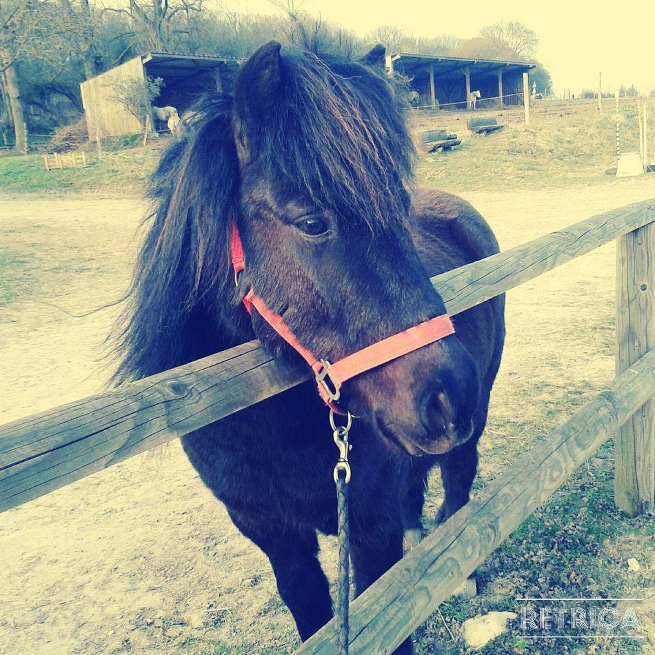 Horses Love LoveMyPony