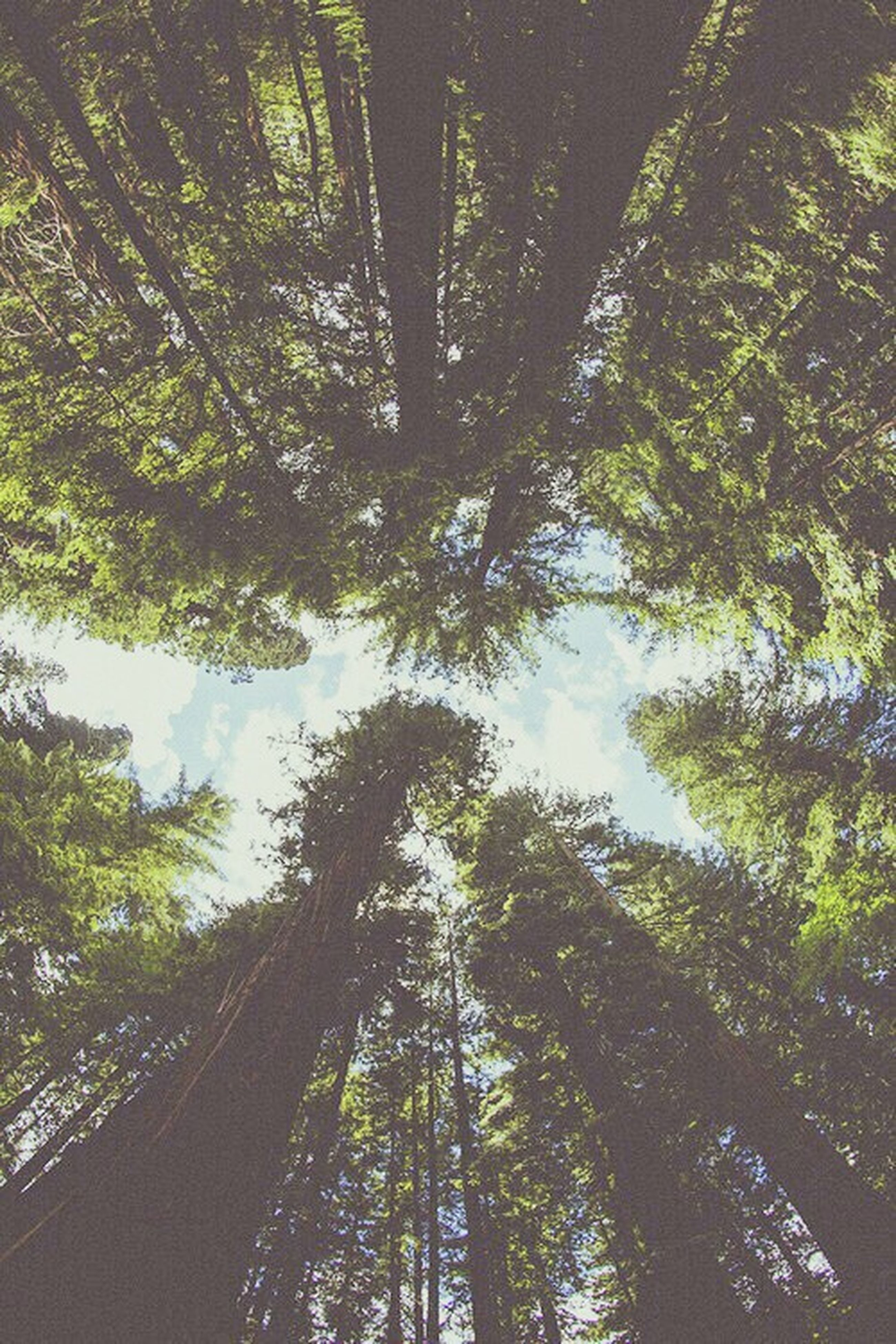 tree, low angle view, growth, tree trunk, tranquility, forest, nature, branch, beauty in nature, green color, woodland, tranquil scene, scenics, day, tall - high, outdoors, sunlight, no people, sky, lush foliage