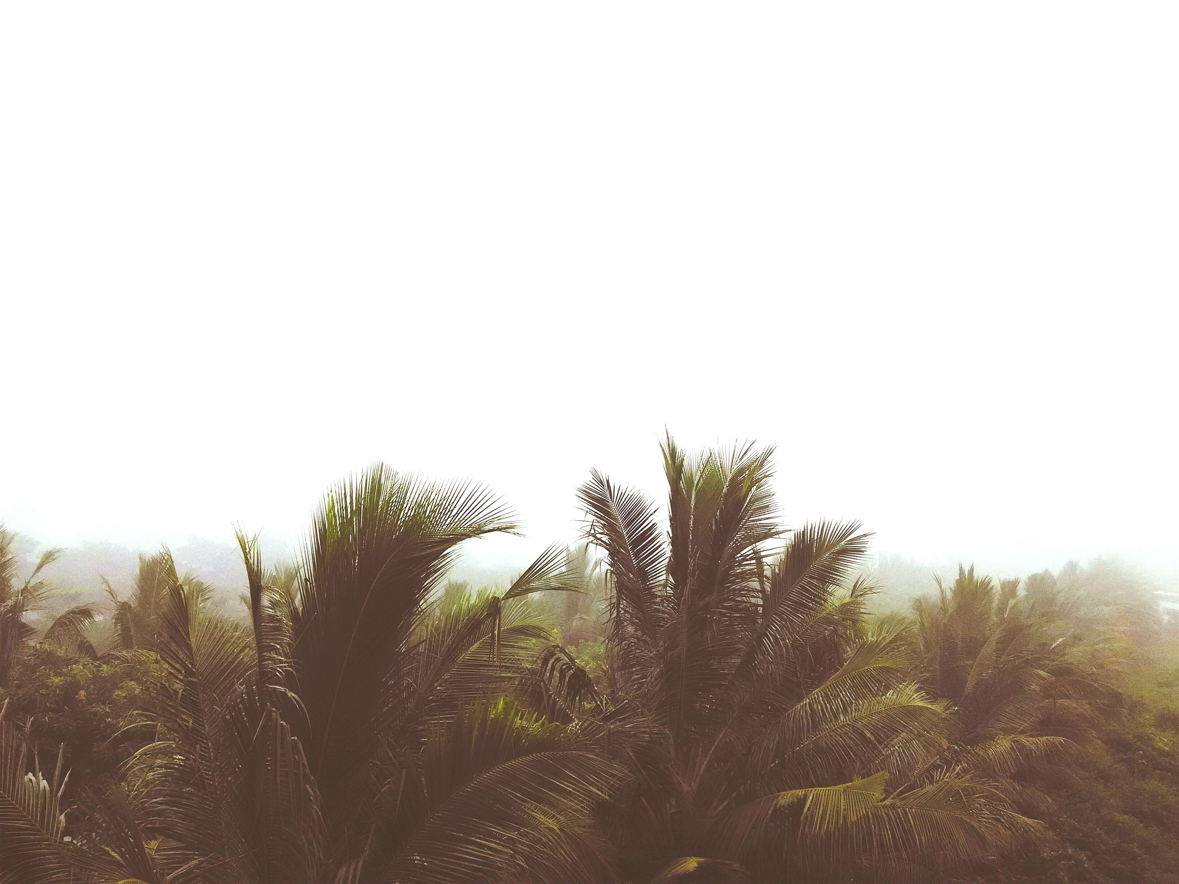 clear sky, copy space, tree, tranquility, growth, tranquil scene, nature, beauty in nature, scenics, low angle view, green color, landscape, day, plant, non-urban scene, outdoors, no people, idyllic, sky, field