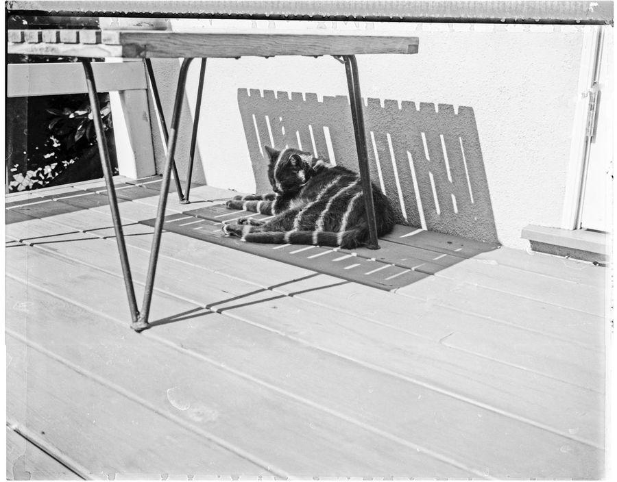 Javier avoiding the California sun. 665 Packfilm Black And White Cat Deck Mid Century Polaroid Polaroid Packfilm Negative Shadow Slat Table Sunshine Wall