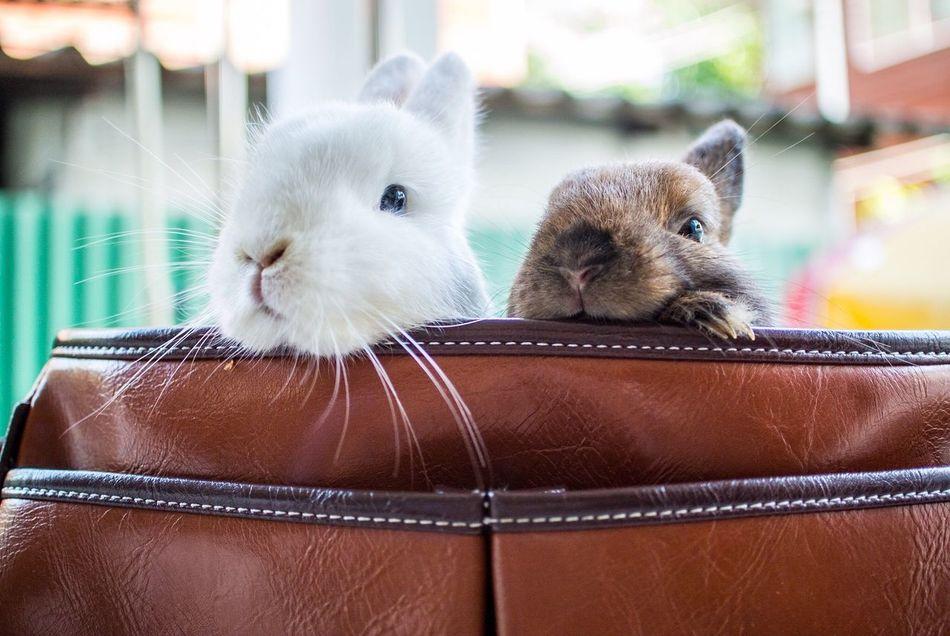 Beautiful stock photos of rabbit, Animal Body Part, Animal Head, Animal Themes, Bag