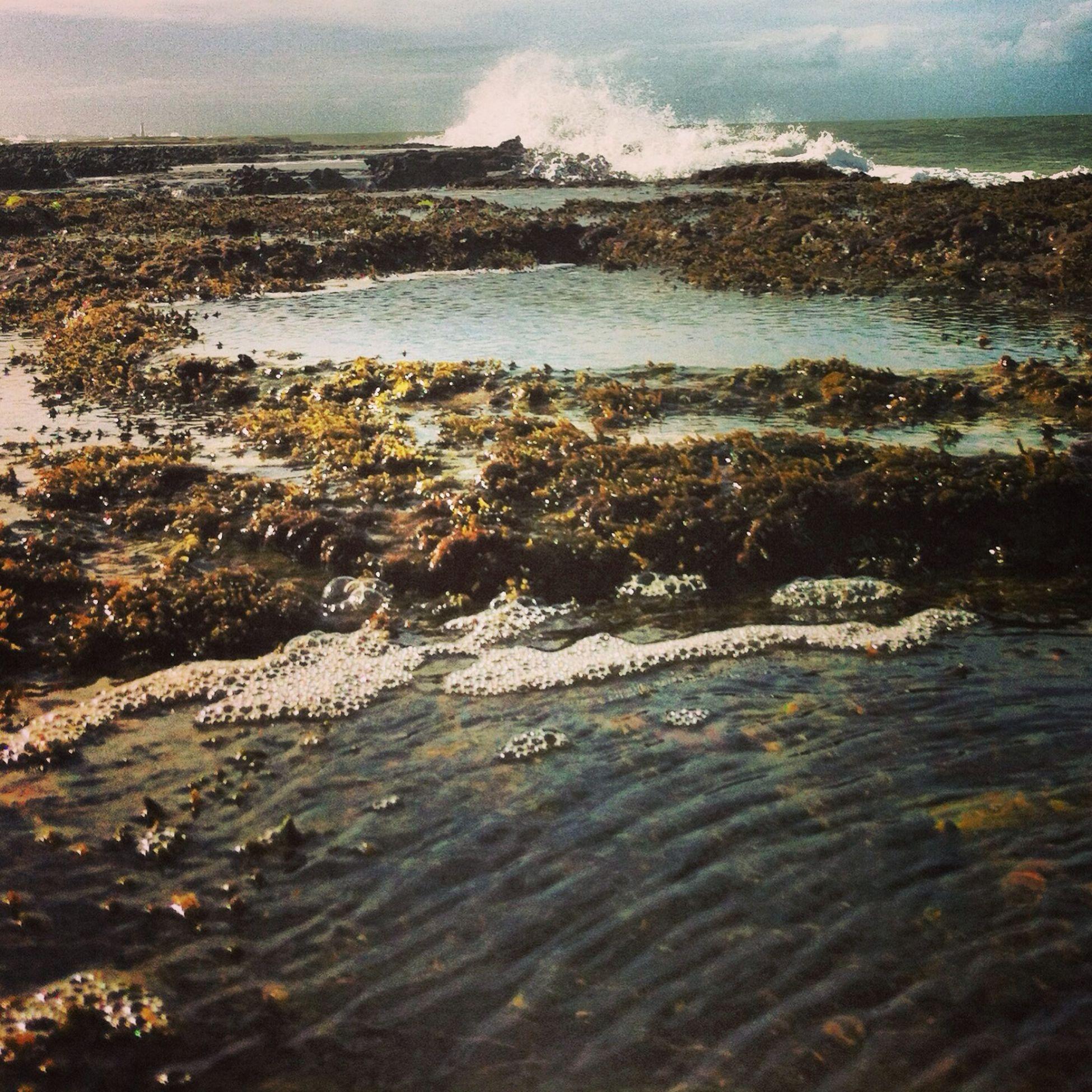 Atlantic Wave Paraíba / Brasil