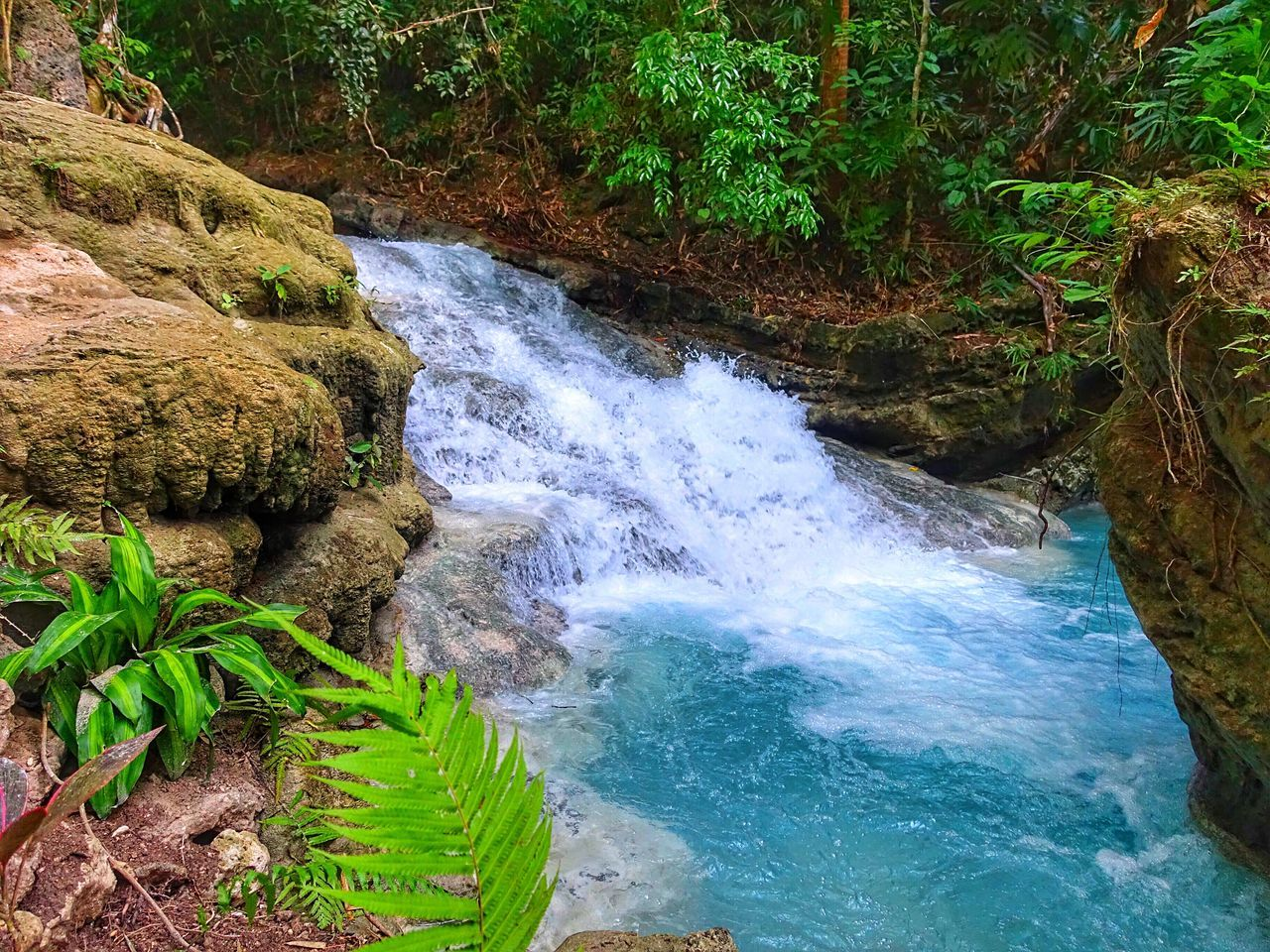 beauty in nature, nature, water, tranquil scene, river, scenics, forest, tranquility, no people, outdoors, day, waterfall, high angle view, green color, motion, tree, plant, growth