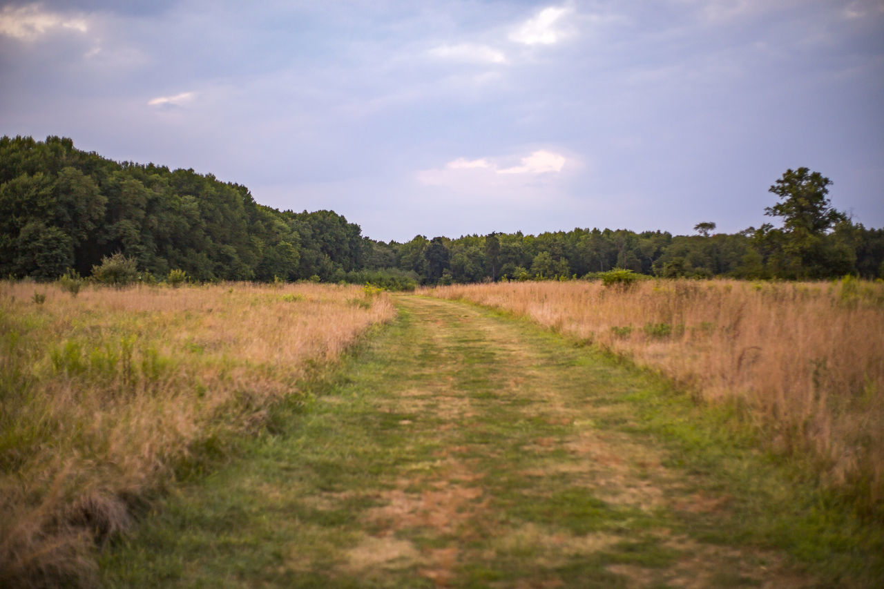 Beauty In Nature Blue Day Exercise Field Grass Grass Growth Haze Hiking Landscape Nature No People Orange Outdoor Outdoors Relaxing Running Scenics Sky Tall Grass Tranquility Tree Walk Walking