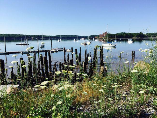 Waterfront Boats Taking Photos Sunny Day Sunny Carol Sharkey Photography Maine