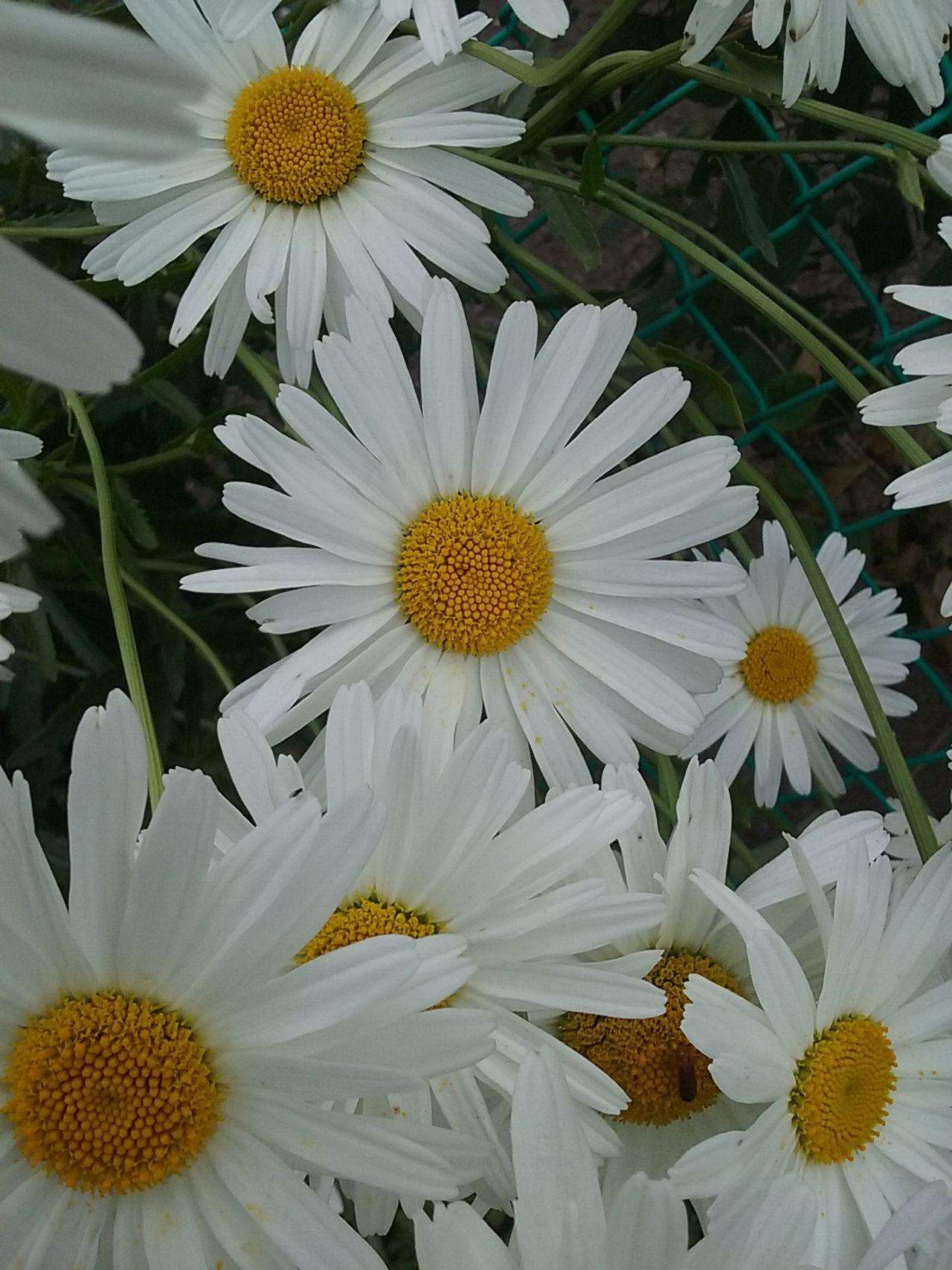 Wht Flowers