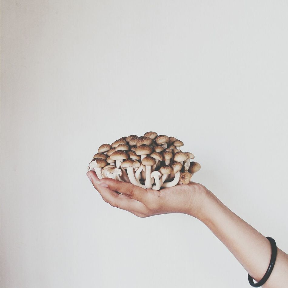 Beautiful stock photos of health, Abundance, Close-up, Fungus, Growth