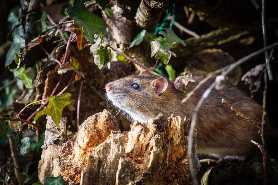 EyeEm Nature Lover Eyem Nature Lovers  Photography EyeEm Gallery Animals Topo Mouse