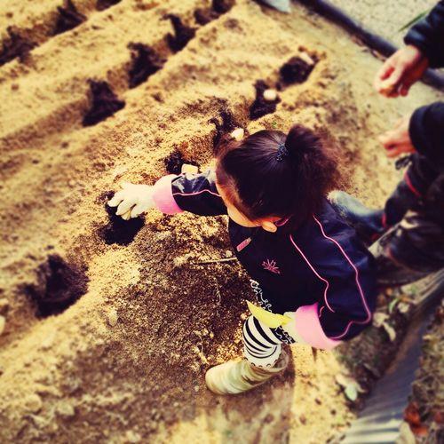 芋植え 畑 自家栽培 Homegrown Farm EyeEm Nature Lover Children